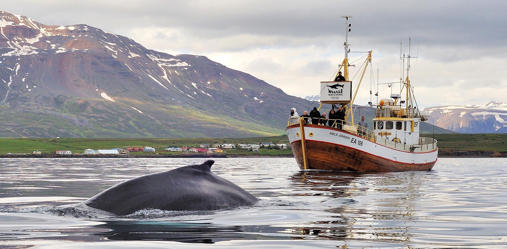 Hauganes Walbeobachtung