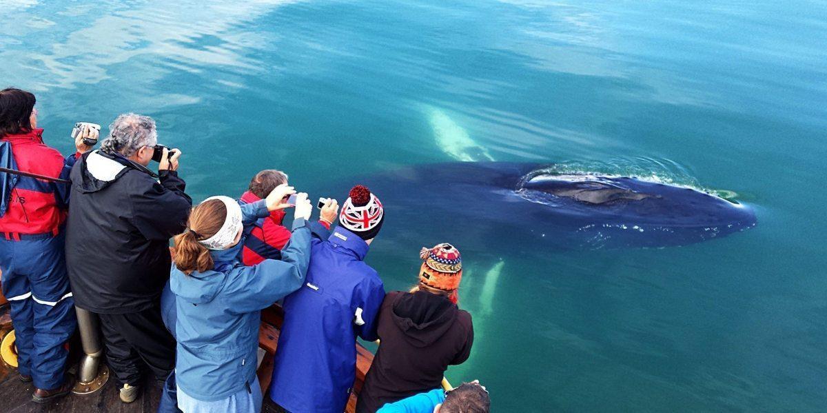 Walbeobachtung & Seeangeln ab Hauganes