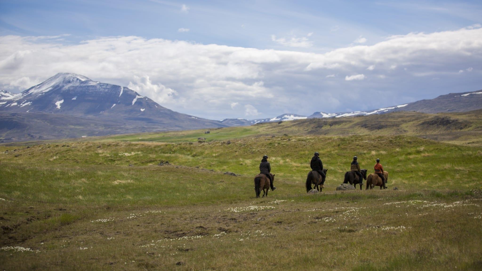 Islandpferd Hestasport