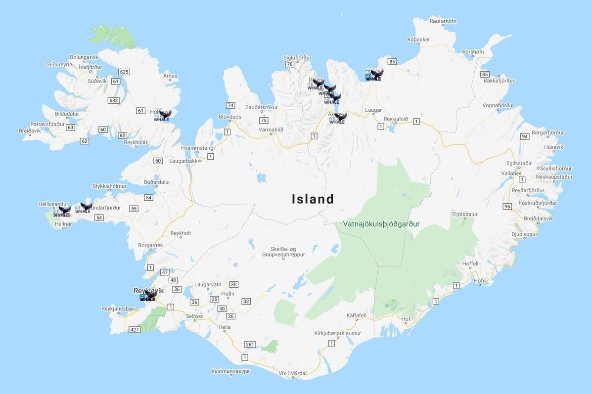 Walbeobachtung rund um Island